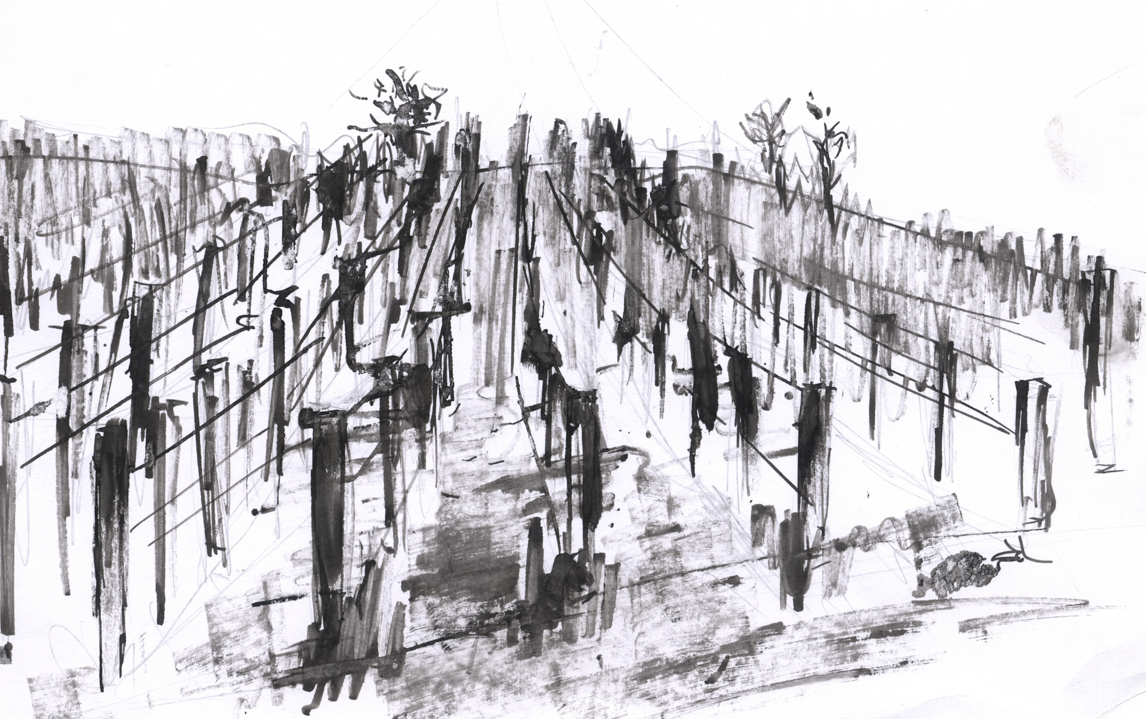 vinice;plátno
